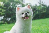 萌芝宠宠物美容