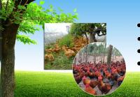 益元家禽业
