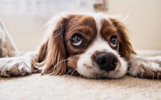 开一家宠物店的所有流程,宠物店需要办理什么证?