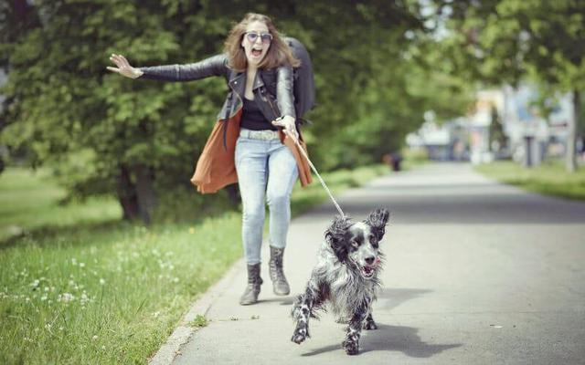 宠物店的小秘密:宠物美容不只是洗剪吹,美容师是高危职业