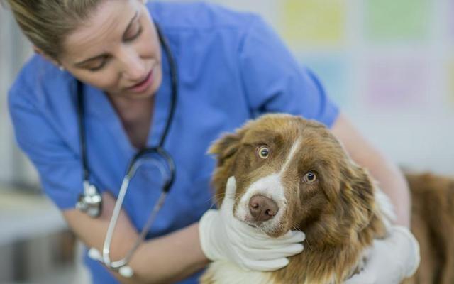 宠物医院宠物店加盟排行哪家好?2020年全国宠物医院排名前十出炉