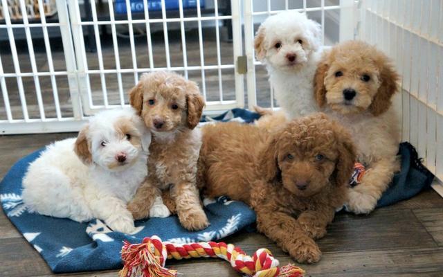 宠物店寄养宠物多少钱一天?宠物寄养生意火爆,商家赚不停