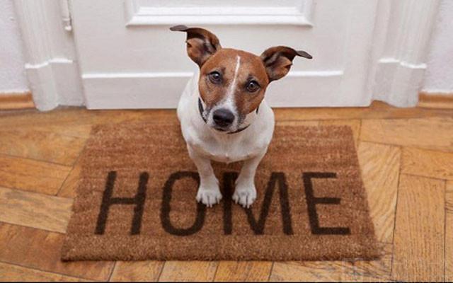 宠物店名字大全,选择合适的宠物店名,打造宠物之家