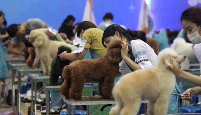 宠物医院的市场大吗,新手如何开一家宠物医院?